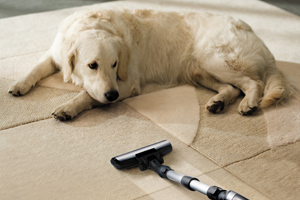 Pet Damage Clean Up Thousand Oaks CA